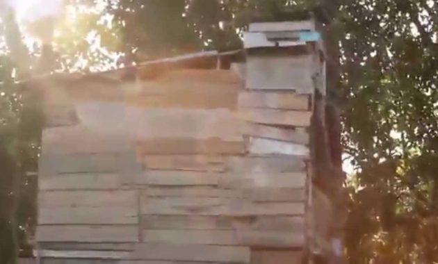 desain rumah walet kecil sederhana murah