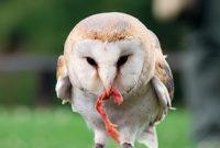 Cara Mengusir Burung Hantu Rumah walet